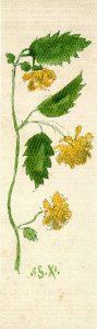 Sp 114 Museum Plantin-Moretus be